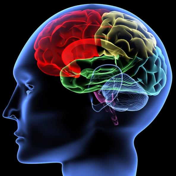 Syaraf Otak